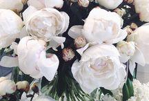 Flowers~