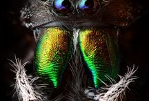 Spiders / Spinne  / Păianjen