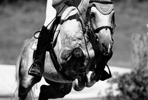 Horses too / Hunters, Jumpers, Eventers, 'Chasers, Polo (or not) Ponies / by Lynn Leyda