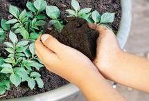 Crecer semillas