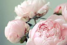 Fleurs/matières