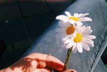 fotos com flores
