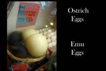 Who loves eggs