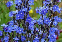 A thru B Alphabetical Flowers / by Amanda Kupiec