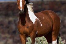 Horses / Beautiful horses wild and Tame