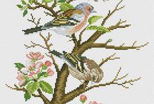 etamin kuşlar