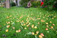 Cider Industry News / News you can use for all things related to craft cidermaking.