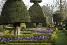 Topiary / Topiary shapes that inspire us