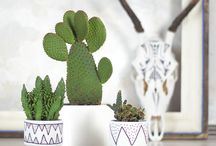 Rośliny/ Plants