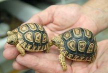 cute turtlesssss
