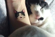 Cute cat! /  cats..