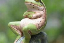 Frösche / funny frogs