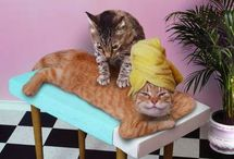 Massage: Animal Antics / by Elements Massage