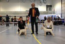 Dogshows / Hundeutstillinger, stiller mine og andre sine hunder:)