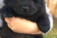 puppies, kittens and other cuties  / cute animals & stuff related