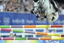 Heste ❤️