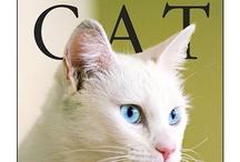 Blue eyed white cats