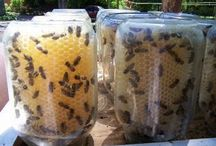 Bees on the Homestead / Everything you need to know about bee keeping and harvesting /storing honey