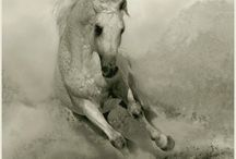Equestrian / A horse is the projection of peoples' dreams about themselves - strong, powerful, beautiful - and it has the capability of giving us escape from our mundane existence.  ~Pam Brown~
