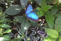 From our visitors: The Butterfly House
