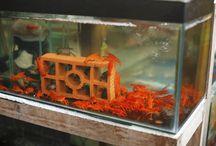 Acuarios / imagenes para decorar acuarios, adornos para acuarios, acuarios en casa