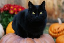 Magical black cats! / magnetic, magical awesome black cats --