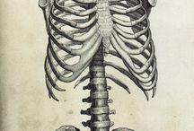 Kostry