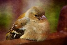 Feathered Friends / by Debbie Petersen