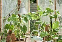 Home | In the garden
