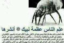 Le prophète  mohamed