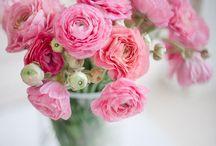 Gorgeous flowers & gardens
