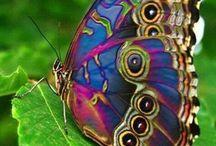 Madarak, pillangók..