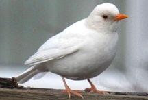 Pássaros brancos