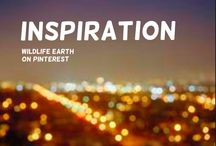 Inspiration / Inspiration group board is dedicated to inspiring others! Wildlife Earth tries to inspire people into loving nature and wildlife, but now it's your turn! Please join.