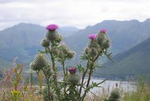 Scottish Anyone / by Jayne Honnold
