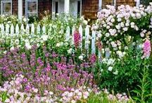 Roses with Cottage and White fence