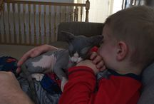 Sphynx cat. My little Spock. / Hairless cats
