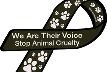For the Animals / Anti cruelty
