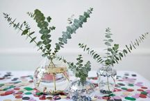 Indoor flowers & plants