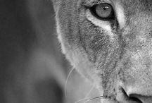 Animal Lover / by Galina Bellinger