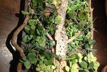 Mini giardino verticale