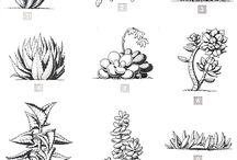 tatoo kaktus