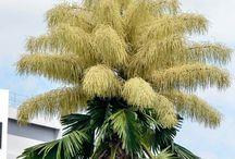 Drzewa Palmowe