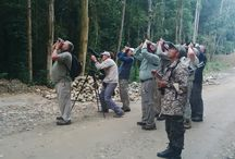 Sulawesi and Halmahera Birdwatching Tours / Organising and guiding Tours