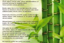 Bambu Ağacının Hikayesi...