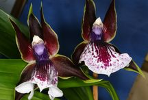 Orchids are stunning / Orchids and plants in general. Plant care or just beautiful pictures of flowers
