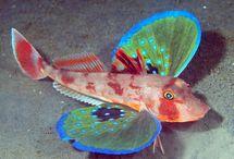 Fische/Wassertiere
