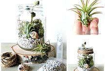 tuin & plante