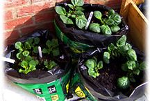 Container gardening / Vegetables for two