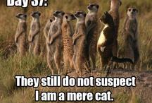 Meerkats / by Laura Goyette